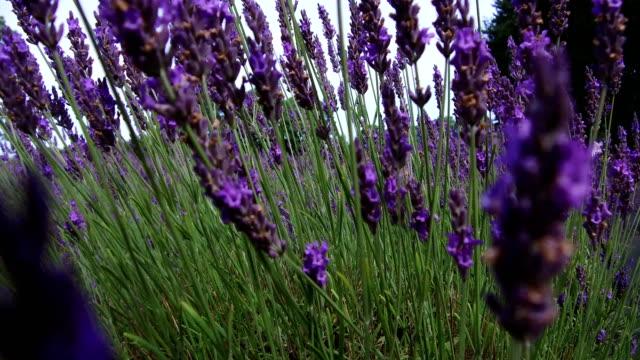 british wild flowers blooming - wildflower stock videos & royalty-free footage