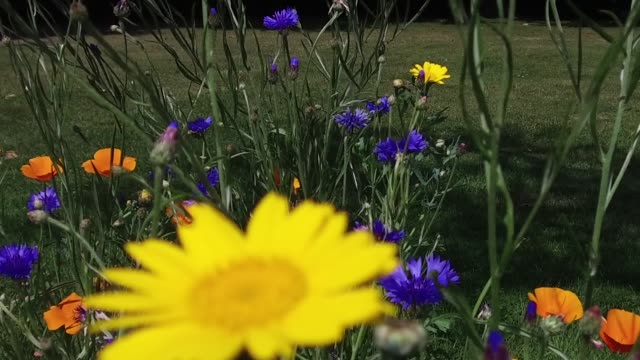 british wild flowers blooming - wildflower stock videos and b-roll footage