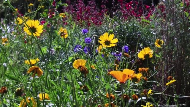 british wild flowers blooming - medium group of animals stock videos & royalty-free footage