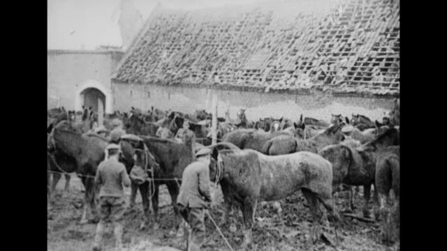 british wwi soldiers attend cavalry horses in a penned up area with shattered roofs behind them / the mounted horses in belly deep in a stream - cavalry stock videos & royalty-free footage