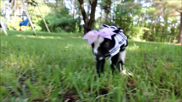 britney denman's goats have proved https://www.youtube.com/channel/ucsugwk2rhwbm7cp-fr18urw/videos?sort=p&view=0&flow=grid very... - https stock videos & royalty-free footage