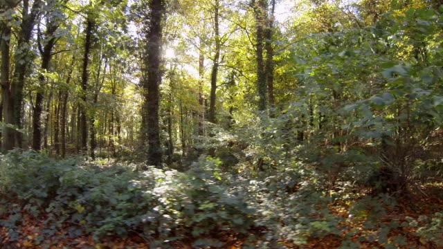 Broadleaf woodland in the fall or autumn