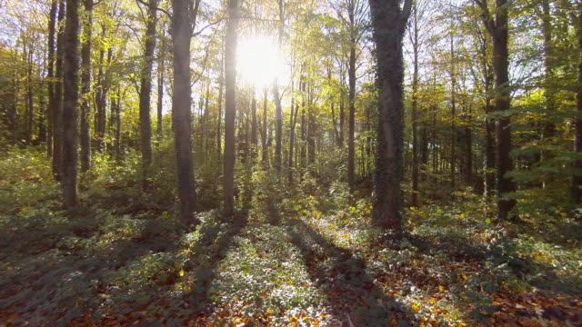 broadleaf woodland in the fall or autumn - woodland stock videos & royalty-free footage