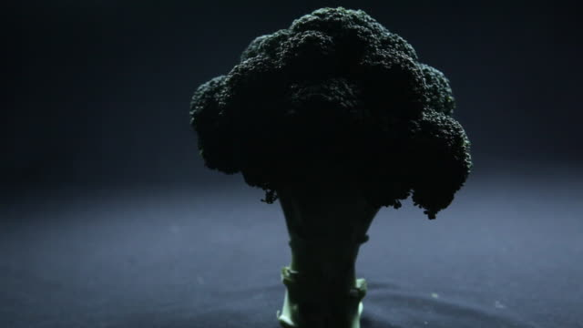 broccoli emerging from darkness. - chiaroscuro stock videos and b-roll footage