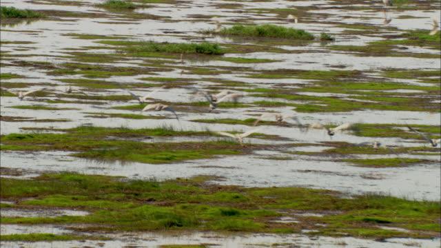 broglas fly over marshland. - 湿地点の映像素材/bロール