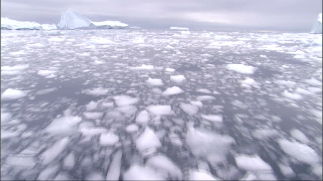 broken chunks of ice scatter on the waters surface around large icebergs. available in hd. - frozen stock videos & royalty-free footage