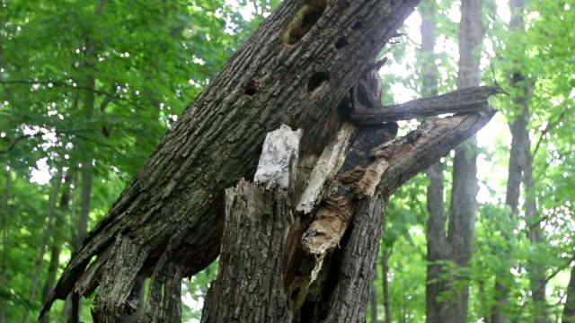 broken tree closeup - fallen tree stock videos and b-roll footage