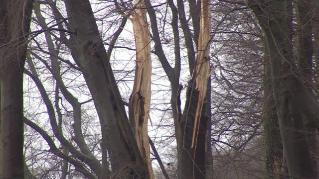vidéos et rushes de broken tree trunks - brindille