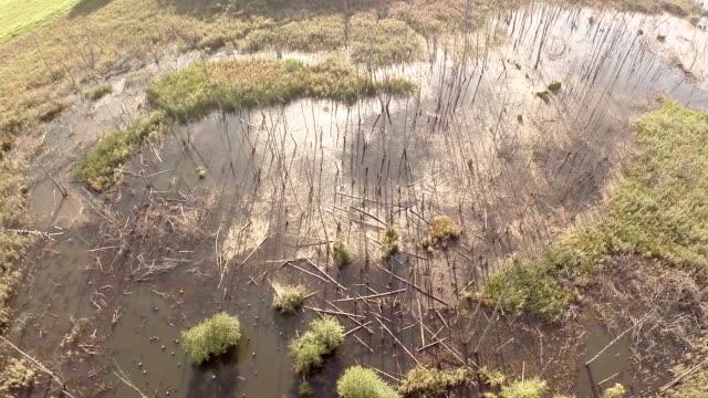 broken trees aerial shot - pinaceae stock videos & royalty-free footage