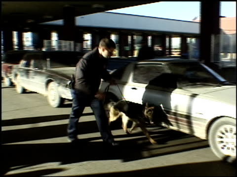 roll k9 searching cars - shock tactics stock videos & royalty-free footage