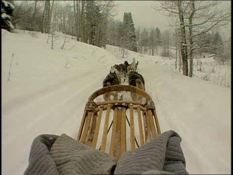 Roll of Being on a dog pulled sled