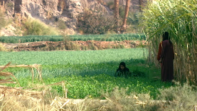 roll zoom-out of girls sitting and harvesting in a verdant field near luxor. - agriculture stock videos & royalty-free footage