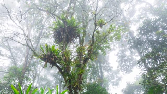 Bromelia in Guayabo National Park