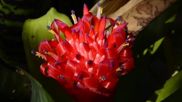 Bromeliad Flower.