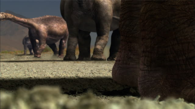 CGI, CU, Brontosaurs standing in field, low section