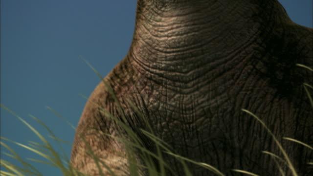 CGI, CU, LA, Brontosaurs walking over camera