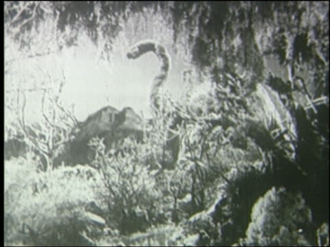 b/w brontosaurus eating in jungle - anno 1925 video stock e b–roll