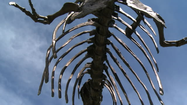Bronze statue of Tyrannosaurus dinosaur skeleton outside the Museum of the Rockies in Montana USA