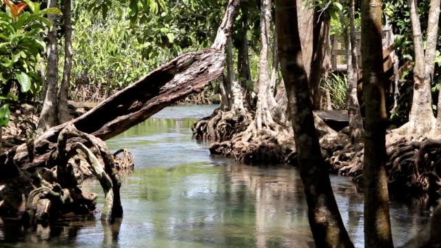 Brook in the mangrove forest (Krabi, Thailand).