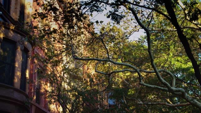 brooklyn residential street - row house stock videos & royalty-free footage
