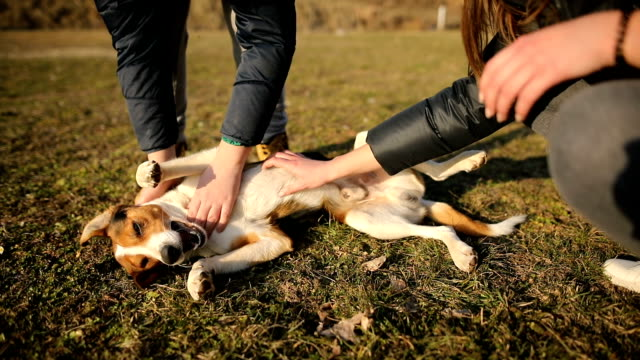 brother and sister in the sunset stroking  stray dog in field - stroking stock videos & royalty-free footage