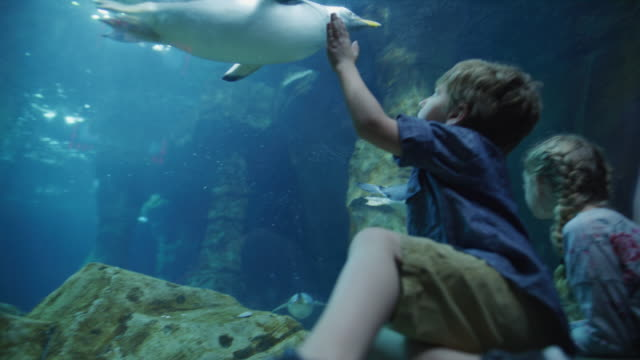 Brother and sister leaning on glass in aquarium watching swimming penguins / Draper, Utah, United States