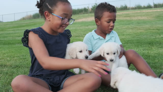 brother and sister play with puppies - stroking stock videos & royalty-free footage