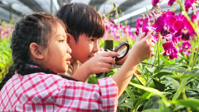 brother and sister using magnifier shines to the orchid, learning outside of the classroom, people and nature concepts - tropical flower stock videos & royalty-free footage