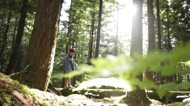ws brother (8-9) and sister (10-11) walking on log in squamish alice lake park / squamish, british columbia, canada - sister stock videos & royalty-free footage