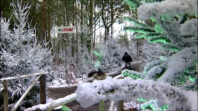 brothers convicted over lapland new forest winter theme park lib lapland new forest ext husky dog pulling man on bicycle through 'snowy' forest - new forest stock videos and b-roll footage