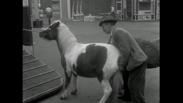 brown and white pony refuses to load onto trailer; 1953 - animal colour stock videos & royalty-free footage