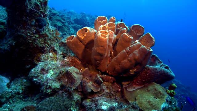vídeos y material grabado en eventos de stock de marrón esponja barril gigante panorama de arrecife - esponja