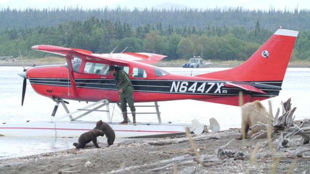 a brown bear family is relaxing on the beach next to a seaplane in katmai national park alaska ranger is protecting the plane - tranquil scene stock videos & royalty-free footage