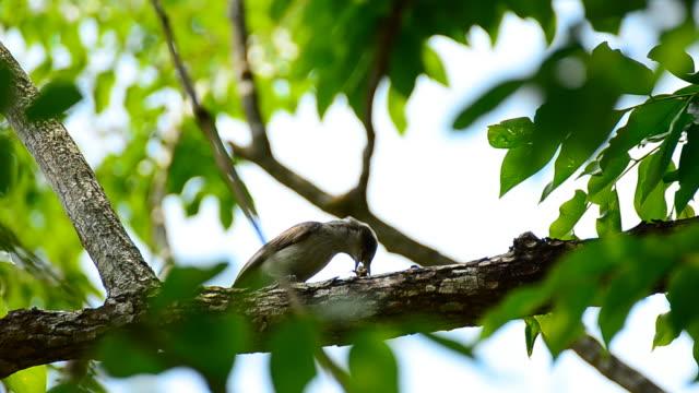 brown bird eating caterpillar - eating stock videos & royalty-free footage