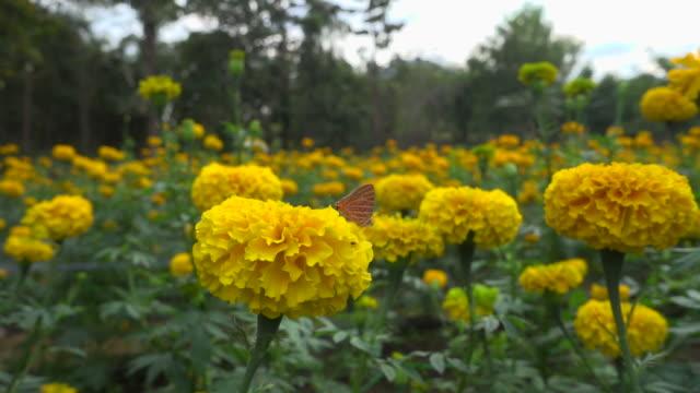 Bruine vlinder omhoog traag