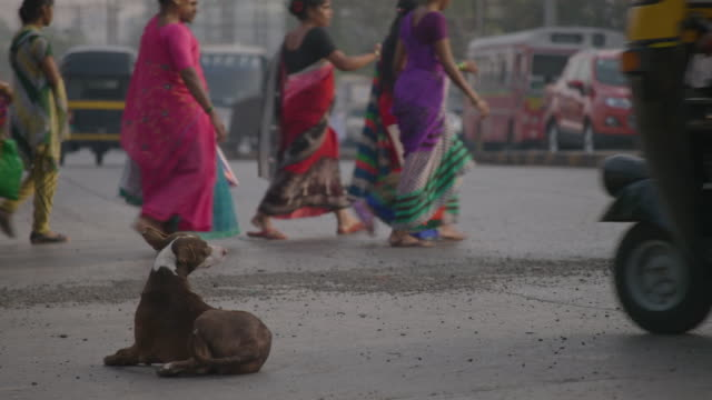 a brown dog lies on a paved road in mumbai, maharashtra, india. - stray animal stock videos & royalty-free footage