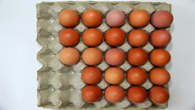 brown eggs in tray - tray stock videos & royalty-free footage