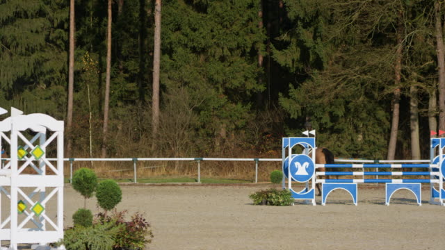 brown horse and his rider jumping over an oxer and hurdles - all horse riding stock videos & royalty-free footage