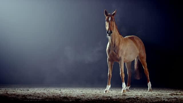slo moブラウン馬は夜にアリーナで注意を払っています - 競走馬点の映像素材/bロール