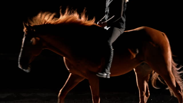 slo mo brown horse being ridden at night - black hairy women stock videos & royalty-free footage