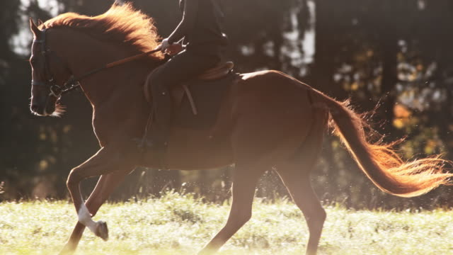 slo mo ts brown horse being ridden in gallop - horseback riding stock videos & royalty-free footage
