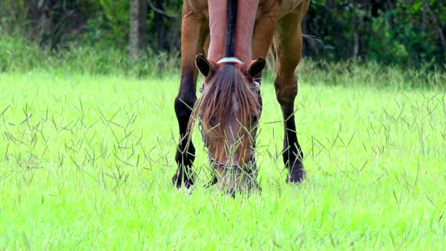 Brown horse eating grass in field during morning time