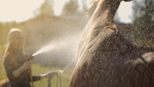 brown horse enjoys spraying shower at blurry sunny background - 雄馬点の映像素材/bロール