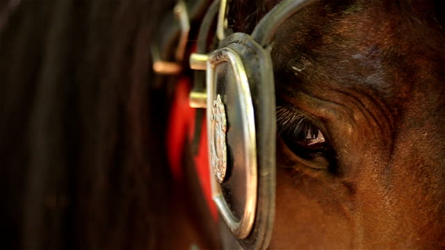 vídeos de stock, filmes e b-roll de close-up do olho marrom cavalo - fauna silvestre