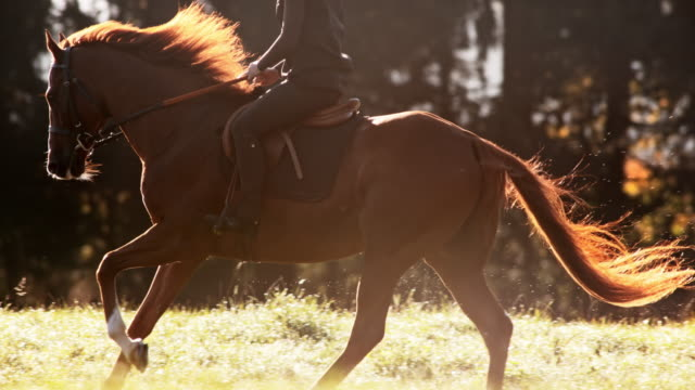 slo mo ts brown horse galloping with rider across meadow - horseback riding stock videos & royalty-free footage