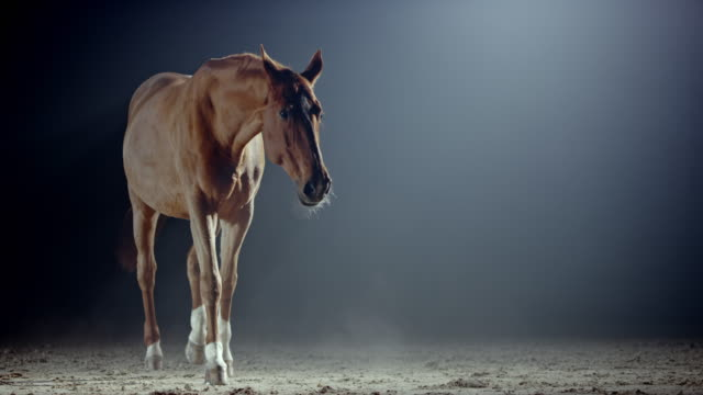 slo mo brown horse in a riding hall at night - braun stock-videos und b-roll-filmmaterial