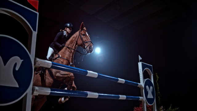SLO MO Brown horse jumping a rail with his female rider