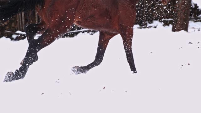 brun häst körs i snörik vinter betesmark, super slow motion - galoppera bildbanksvideor och videomaterial från bakom kulisserna