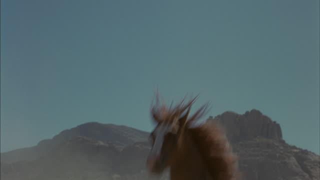 a brown horse runs through the desert towards the camera. - bucking stock videos & royalty-free footage