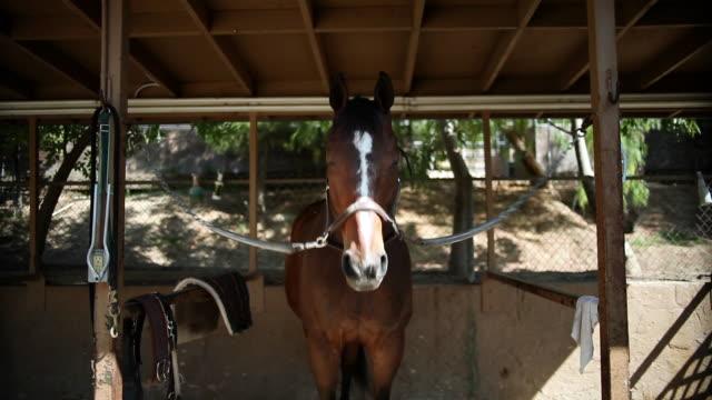 ms brown horse tethered to stable bobbing head up and down / los angeles, ca, united states - arbetsdjur bildbanksvideor och videomaterial från bakom kulisserna